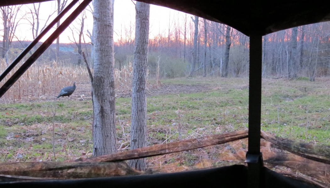 Three Things to Not do This Turkey Season