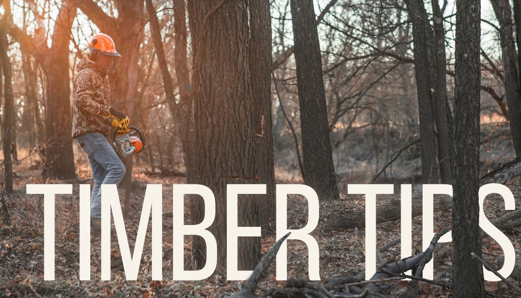 Building Whitetails - Timber Tips for Hunting Land Management