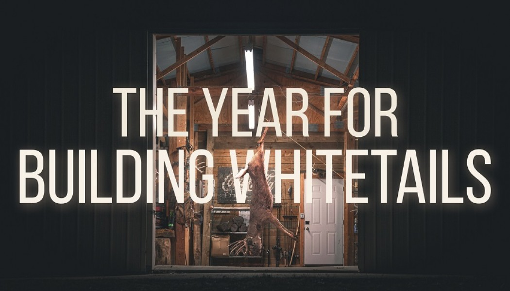 Building Whitetails - A Year For Building Whitetails