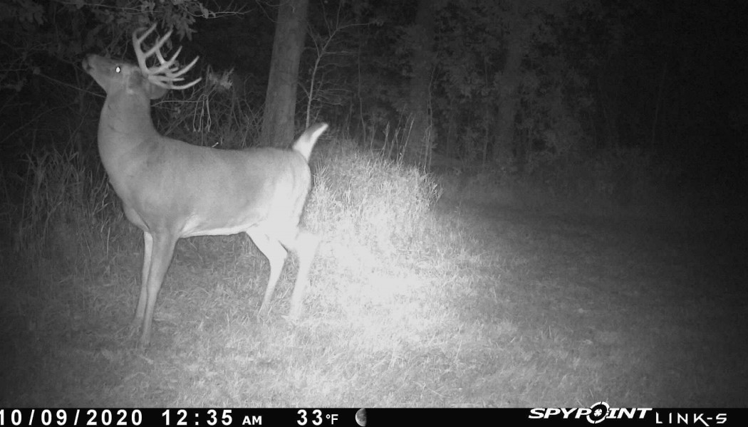 How to Spot the Rut Using Trail Cameras