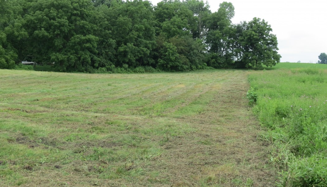 Unconventional Food Plot Options for Deer Hunting