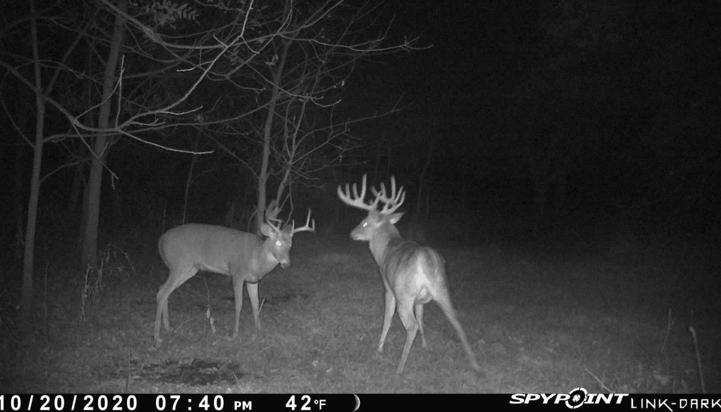 Big Bucks Aren't All Smart, Are They?
