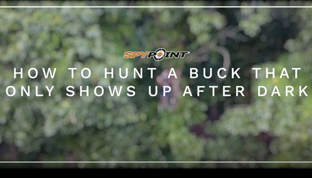 How to Hunt Bucks That Show Up After Dark