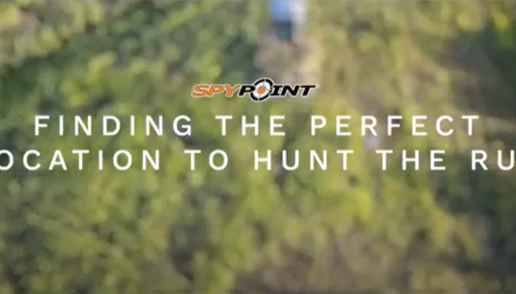 Where Should You Hunt During the Rut?