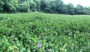 THREE QUESTIONS TO ASK BEFORE YOU PLANT A FOOD PLOT